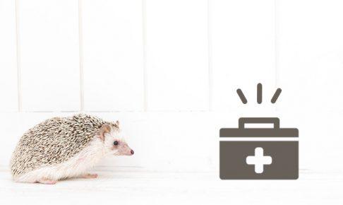 ハリネズミのくしゃみが治らないので病院へ行ってみた。原因や診察料金は?