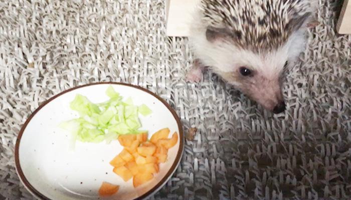 ハリネズミがフード以外で食べられる野菜や果物と食べられないものをまとめてみた